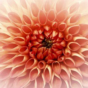 Demut Egobefreiung Lichtessenz Transformation